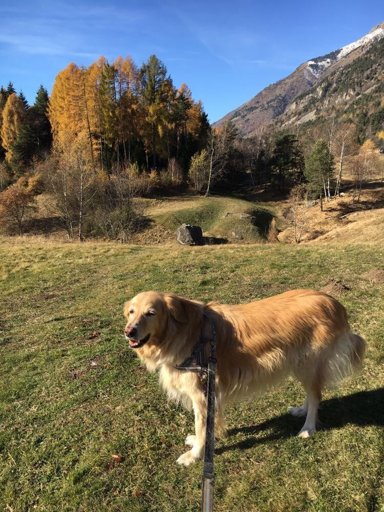 montagna-cane